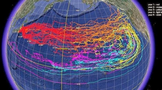 Radioaktivität Pazifik Verdünnung